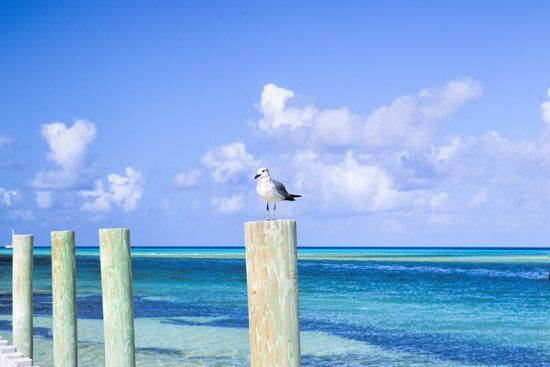 IFF Islands_Bimini Sea View_Image_Bahamas.com