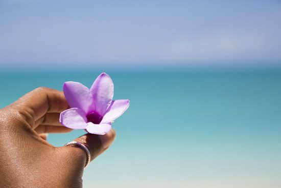 IFF Islands_Cat Island Flower_Image_Bahamas.com