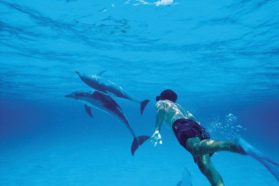 IFF Islands_Grand Bahama Swimming with Dophins_Image_Bahamas.com