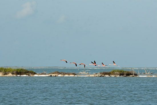 IFF Islands_Inagua Birds in Flight_Image_Bahamas.com