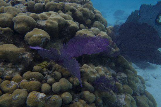 IFF Islands_Inagua Snorkeling_Image_Bahamas.com